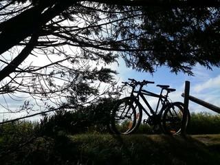 Biciclette appoggiate a uno steccato