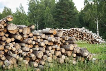 Wall Murals Sheep Deforested cut tree wood