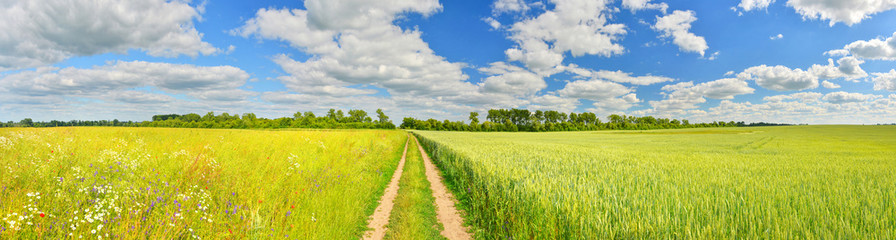 Panorama of a country road and summer fields Fotoväggar