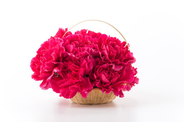 red carnations flower