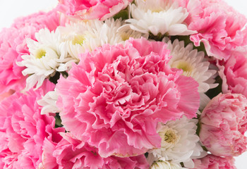 pink carnations flower