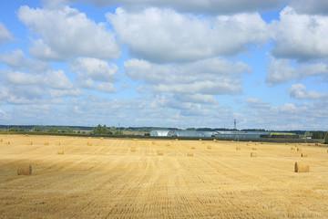 field landscape Indian summer grain harvest expanse