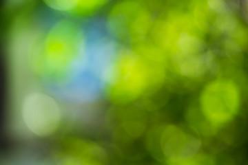 green bokeh foliage. natural background