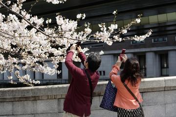 桜の花を撮影する人