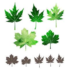 Set of watercolor leaves. Green leaves set.
