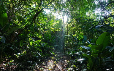Footpath in the jungle of Costa Rica