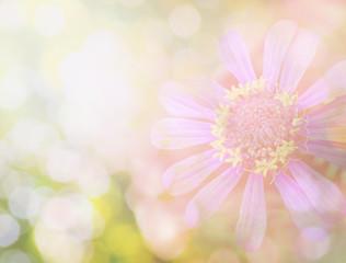 flower in vintage color