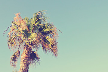 Palm tree top against clear blue sky on a sunny afternoon; can be used as summer background. Filtered image in faded, washed-out, retro style; exotic summer vintage concept.