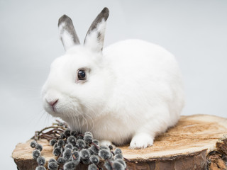White rabbit and easter willow on a wooden background.