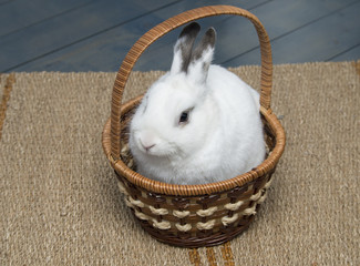 White bunny in basket.
