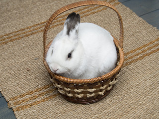 White bunny in basket