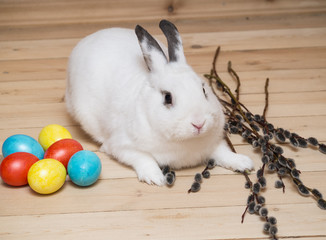 White rabbit with eggs and easter willow on a wooden background