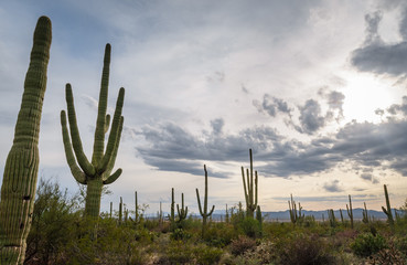 Veiw at Saguaro National Park