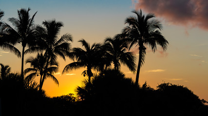 Sanibel Island, Florida, Sunrise, Palm Trees