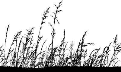 Silhouette grass.