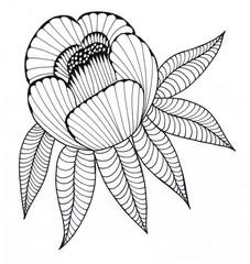 Peony graphic / Stylized peony, hand-drawn
