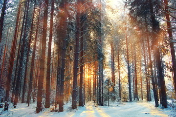 winter forest landscape sun rays