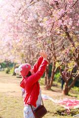 Portrait of beautiful Thai woman tourist use telephone take a photo sakura in a spring cherry blossom garden.