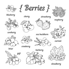 Hand sketched berries: strawberry, cherry, blueberry, goji, raspberry, cloudberry, barberry, briar, currant