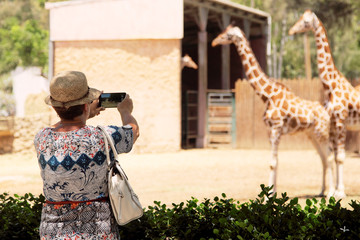 elderly woman making picture of giraffes in the zoo