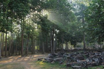 アンコールトムの森
