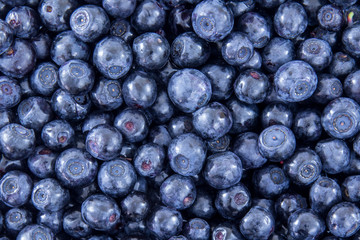 Blueberry background pattern