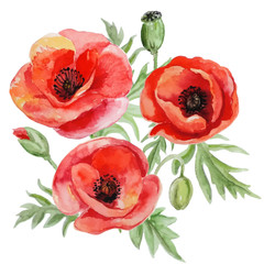 Vector bouquet of red watercolor poppy flowers.
