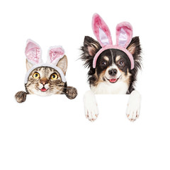Fototapete - Happy Easter Dog and Cat Over White Banner