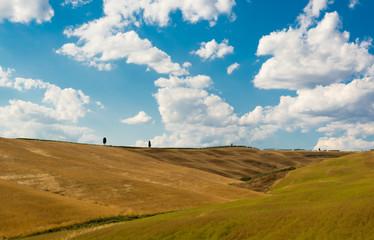 Le colline di Montalcino, città del vino , Siena