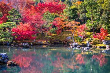 Wall Mural - Japanese garden in falling autumn season