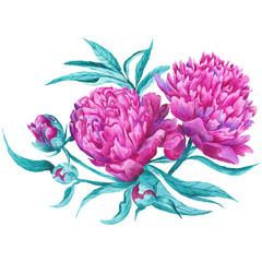 Pink Peony Botanical Illustration