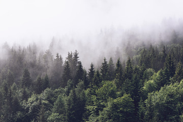 Foto auf Leinwand Weiß Forested mountain slope in low lying cloud