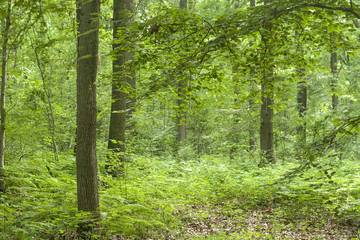 green and wild vegetation in a forest