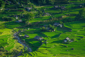 Photo sur Aluminium Vert Rice fields on terraced in rainny season at SAPA, Lao Cai, Vietnam.