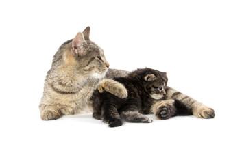 Female tabby cat and kitten