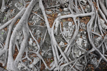 twisted roots and intertwined joints