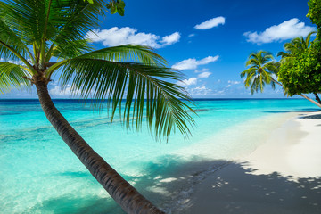 coco palm on tropical paradise beach with turquoise blue water and blue sky