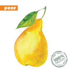 vector watercolor yellow pear