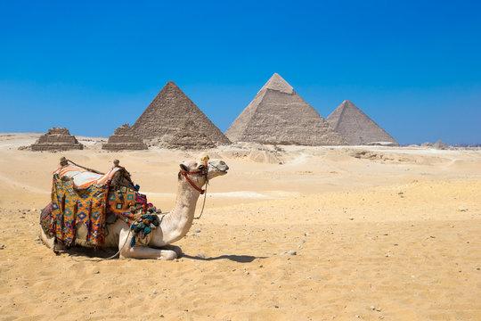 Giza in Cairo, Egypt.