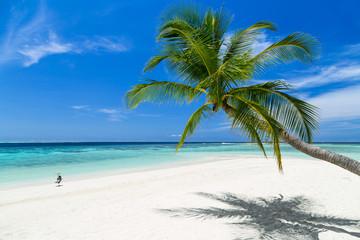 coco palm and heron bird on paradise beach
