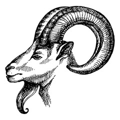Hand drawn sketch portrait of goat. Vector illustration