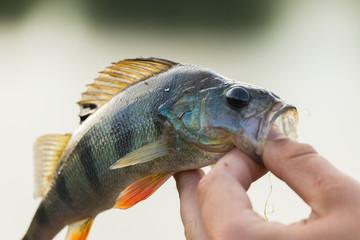 Fishing, fishing on the river. Spinning fishing.
