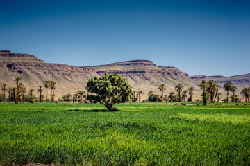 Cultivated land in Morocco