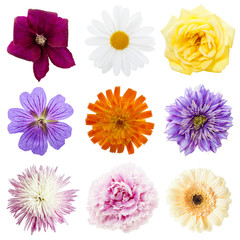 Collection of multicolored flower heads isolated on white background
