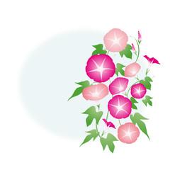 朝顔-02■あさがお・アサガオ・夏イメージ・ピンク・赤紫