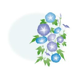 朝顔-03■あさがお・アサガオ・夏イメージ・水色・紫色