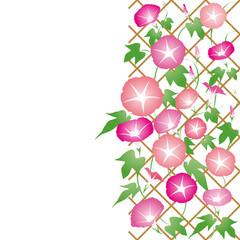 朝顔-05■あさがお・アサガオ・夏イメージ・ピンク・赤紫