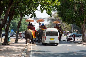 Elefanten im Strassenverkehr