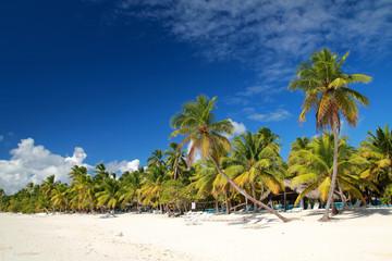 Recess Fitting Caribbean Palms on caribbean sea