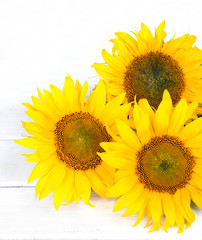 huge yellow sunflowers in a bouquet